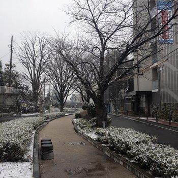 エントランスを出るとこんな感じの散歩道が。写真手前に駅前に続く通りがあります。