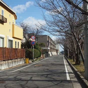 【近隣】駅までの道には桜の木。