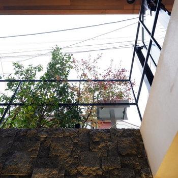 上を見上げると植栽が。