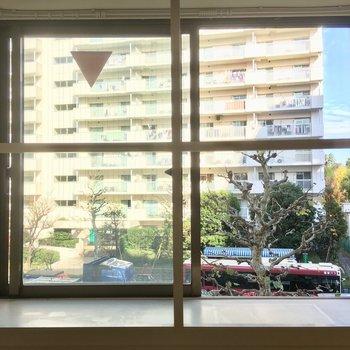 十字の木枠がかわいい出窓に観葉植物を飾りたい。