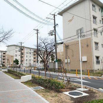 A棟周辺は、歩道も綺麗に整備され、緑がたくさん。