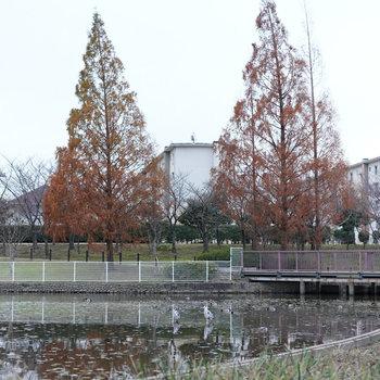 こちら、お隣の白鷺公園。