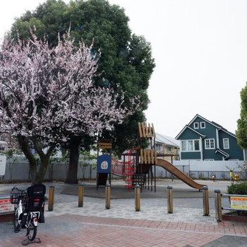 【おまけ】お隣の公園。のんびりとした空気!