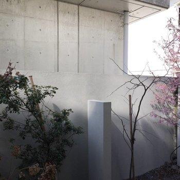 桜やアジサイなど、四季を感じられる植物達にいやされます。