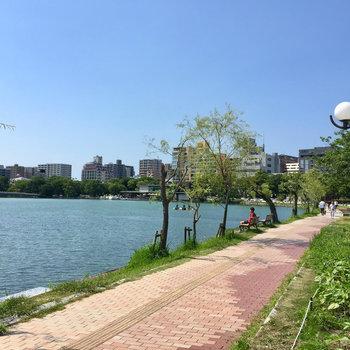 晴れた日には大濠公園をお散歩。