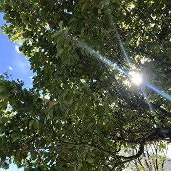 朝眺める木漏れ日が心地良い