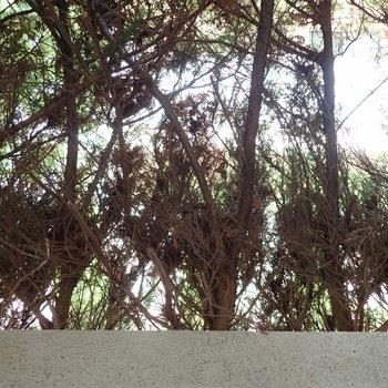 正面は裏路地ですが、植栽でワンクッション。