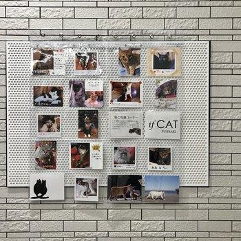 1部屋1枠あって、写真を好きに飾れるみたい。猫好きの輪が広がります。