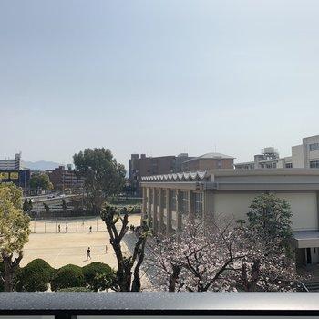 桜が見える、いい眺めだな。