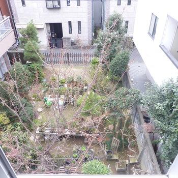 【洋室】南側は隣家の庭が見えます。