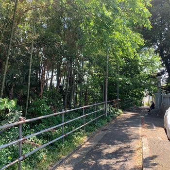 バス停からアパートに向かう途中、竹林がありました。初夏でも涼しい雰囲気がいいですね。