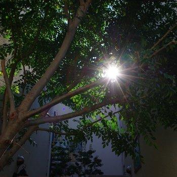 葉の隙間から見え隠れする木漏れ日