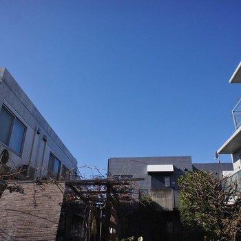 建物は三棟に、夏には木々が緑豊かに彩ります。
