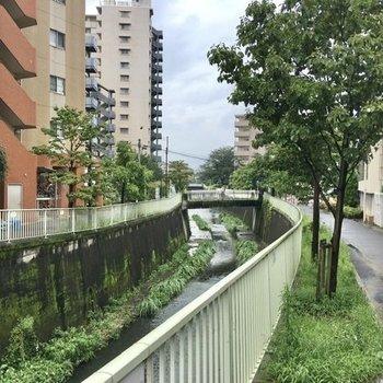 駅からお部屋に向かう途中、神田川が流れています。