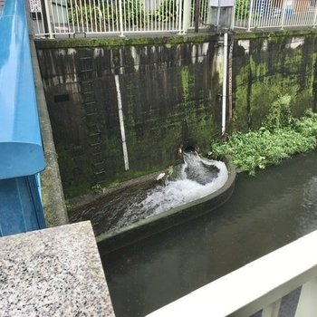 玉川上水の水が勢いよく流れ込んでいました。