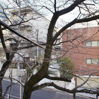 窓を開けるとこんな近くに桜の木が♡