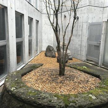 中庭にはこんな木が!