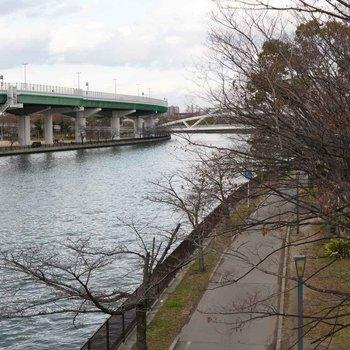 大川から見た風景。この辺りは桜の名所として知られています。