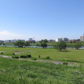 徒歩1分ほどの多摩川。立地は申し分ないですね。風が気持ち良い〜。