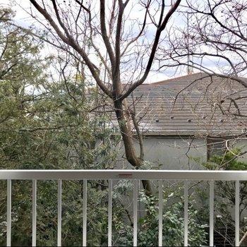 南東向きの窓を望めば、季節を知らせる草木がこんにちは。