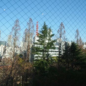 ちなみに!こちらは北向きの窓から見える靭公園の景色!季節を感じ取れるんです◎