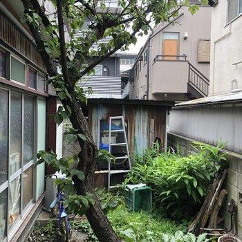 小さい方の窓から。お隣のお庭が見えます。