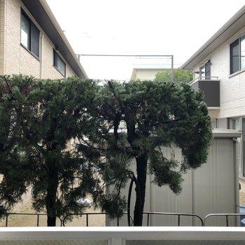 1階だけど人目は気にならない、、!木の隙間から小学校がちらっと見えます。