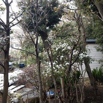 眺望はイマイチ。隣家の庭が見えます。