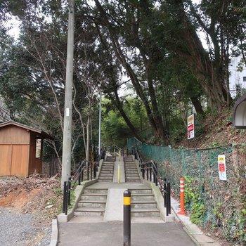 裏手のこの道を登っていくと動植物園に繋がってるんですって♩お散歩も楽しいだろうな〜