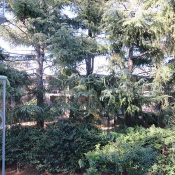 窓からは森が見えますよ〜