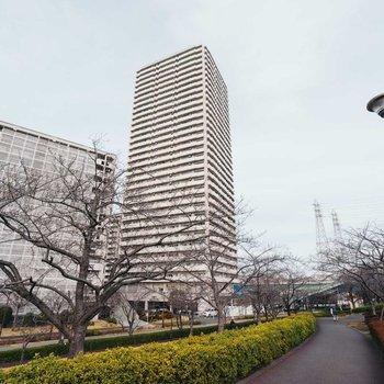 川沿いの桜並木を見下ろす33階建のタワー棟を含む団地です。