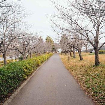川沿いの桜並木は、「小松川千本桜」と呼ばれています。春の眺望に大いに期待です。