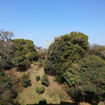 な、なんと!眺望は舞鶴公園!この抜け感が心地よい。※写真7階別部屋のものです