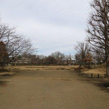 公園は目の前