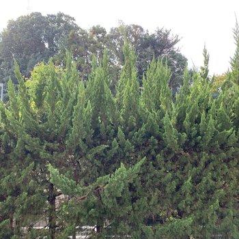 常緑針葉樹が外からの視界を遮ってくれます◎