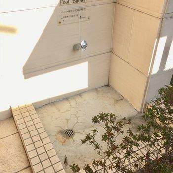 エントランス前にはペット用の水道!これなら、雨の日の散歩もできますね。