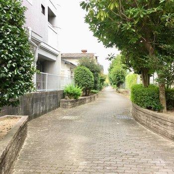 大通りを通らなくても、マンション横のくねくね小道をとおるの好き!