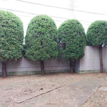 専用庭は外から見えないように植栽があります。
