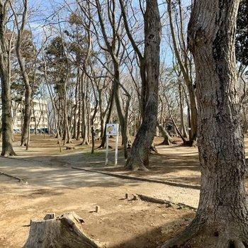 さらに緑豊かな公園も。ここで季節を感じられます。