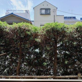 1階ですが目の前の植栽のおかげで安心。