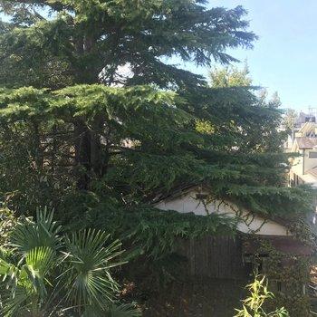 隣家の木が見えました。