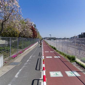 駅までの道に桜が綺麗な遊歩道がありましたよ。