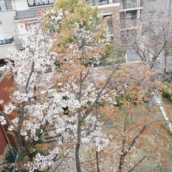 桜の季節にあなたと