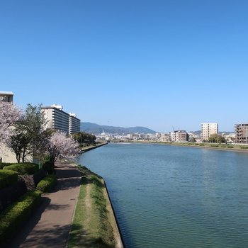 桜並木を見ながら川沿いをお散歩しませんか?
