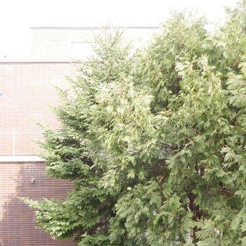 木がもりもり