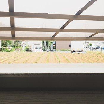 ベランダからは畑が見えます。 のどかでいい。