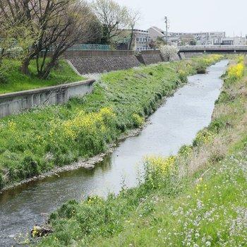 周辺環境も、自然豊かで穏やかで、素敵なんです。