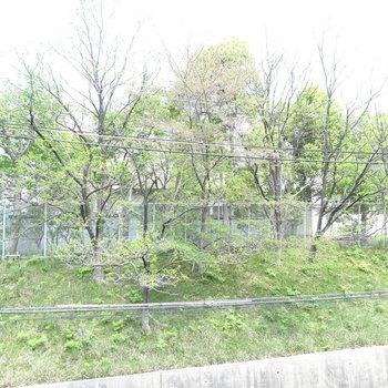 こちら側の窓から見えるのは小学校。緑と笑い声に癒やされます。