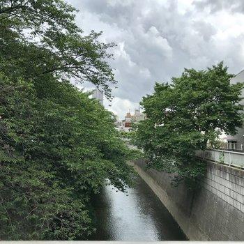 お部屋近くに川。たまに、ぼーっとしにきたり。