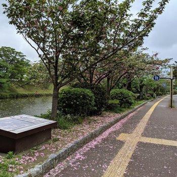毎日目にする景色が素敵過ぎる。春は桜の名所でもあります。